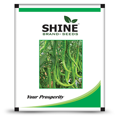 Chilli F1 Shine-610 (10 GM)