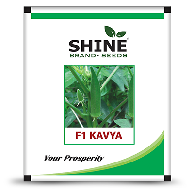 Okra F1 Kavya - Bhendi Seed (250 GM)